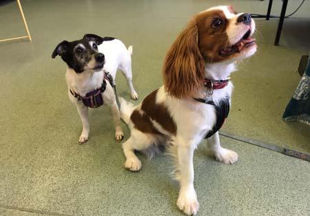 Maggie-(Left)-Aflie(Right)