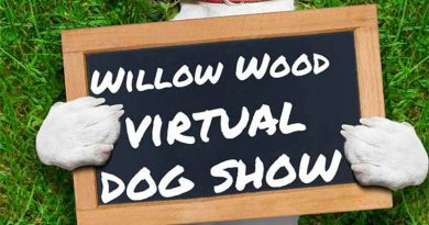 willow-wood-virtual-dog-show-4